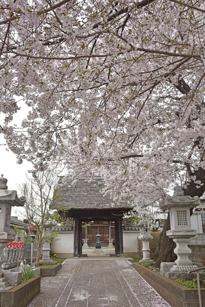 地元の桜_e0367330_21205938.jpg
