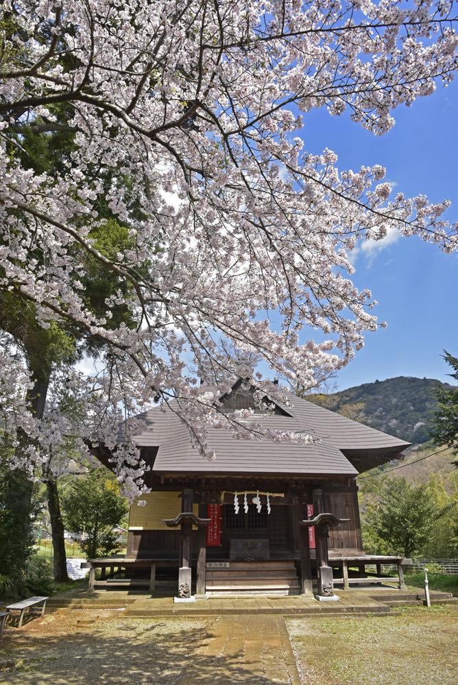 地元の桜_e0367330_21222370.jpg