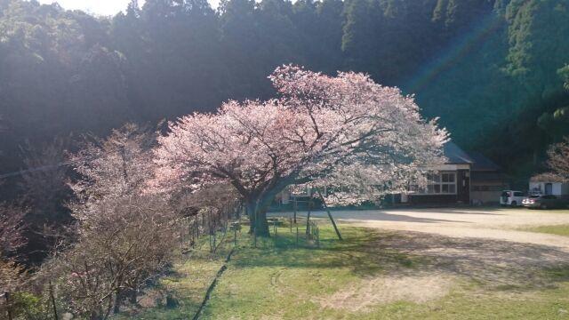 久保山のヤマザクラ見に行ってきました_e0149436_23012770.jpg