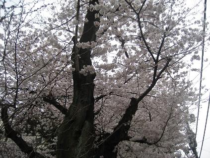 春ですね・・・_c0206545_16342869.jpg