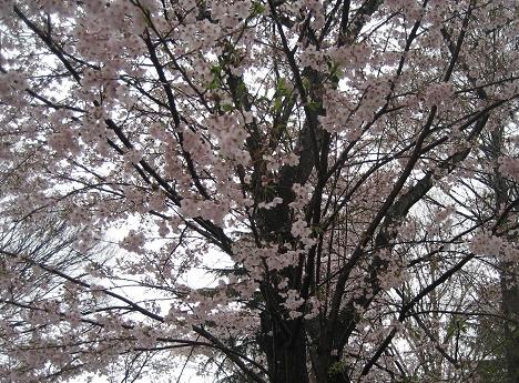 春ですね・・・_c0206545_16344819.jpg