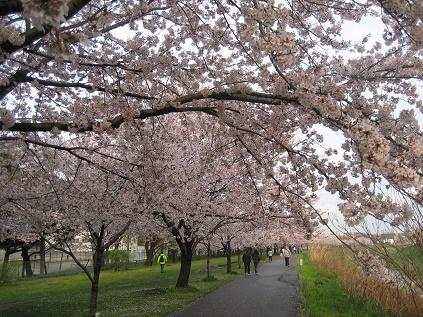 春ですね・・・_c0206545_16413833.jpg