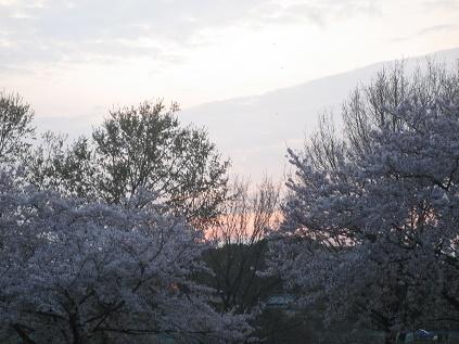 春ですね・・・_c0206545_16422532.jpg