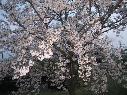 春ですね・・・_c0206545_1643043.jpg