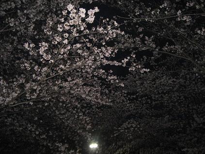 春ですね・・・_c0206545_16432419.jpg