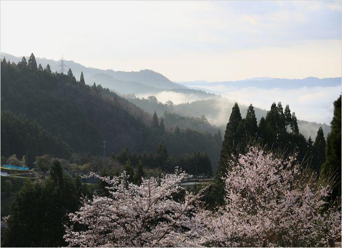 醍醐桜_a0256349_23113321.jpg