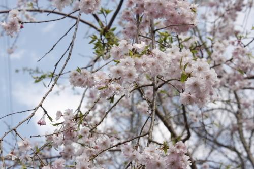 4月16日 娘と一緒に琵琶湖へ_a0023466_21153164.jpg