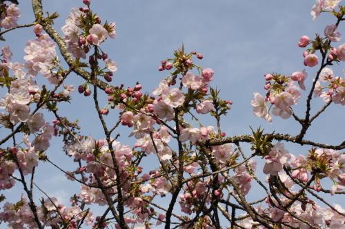 4月16日 娘と一緒に琵琶湖へ_a0023466_21213045.jpg