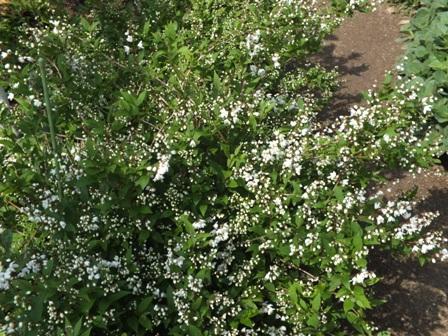 庭に夢中です!_b0214473_10374049.jpg