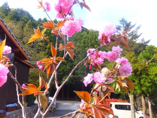 春を楽しみました。_d0251679_22455043.jpg