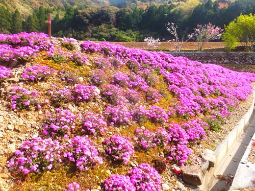 春を楽しみました。_d0251679_22502279.jpg