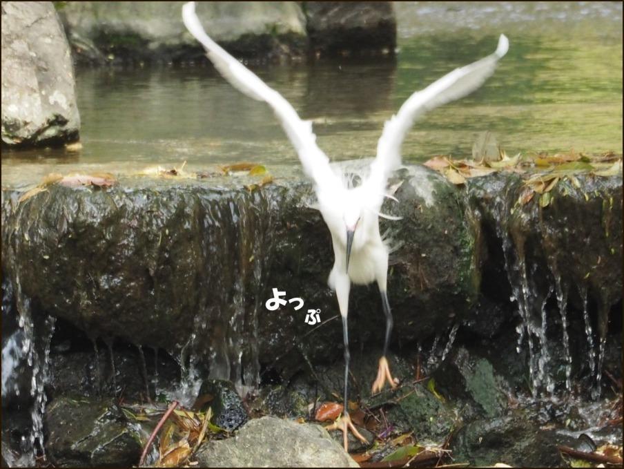 桜の見納めと鳥さん_c0228386_15535534.jpg