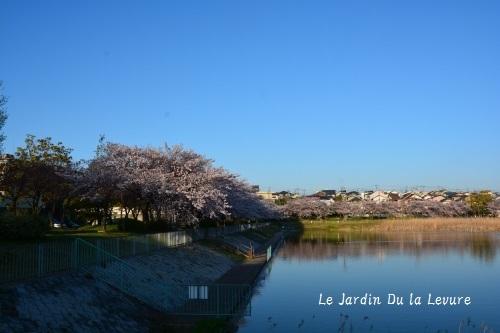 桜散りました!_f0329586_16504522.jpg