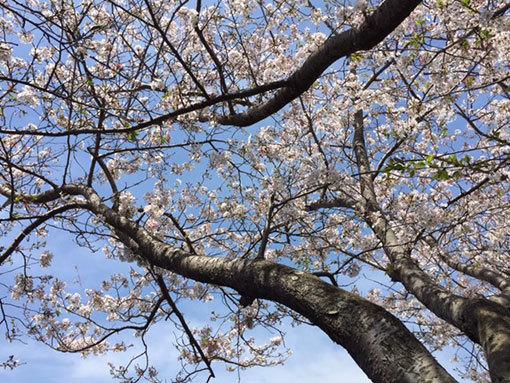 お花見フリマ_d0071596_21554600.jpg