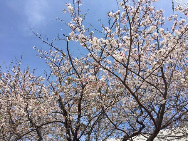 お花見フリマ_d0071596_21561434.jpg