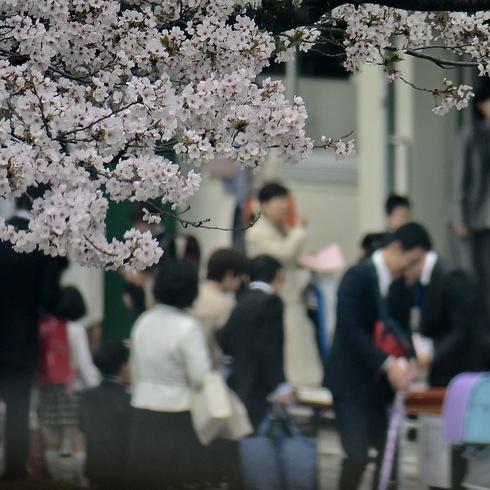 2017 桜.さくら.サクラ_f0099102_12243432.jpg