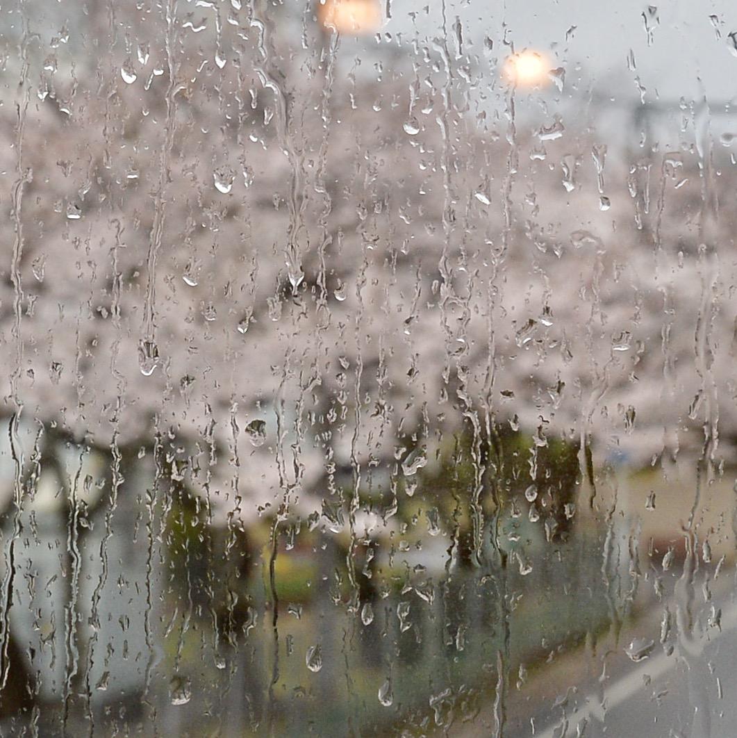 2017 桜.さくら.サクラ_f0099102_1225846.jpg