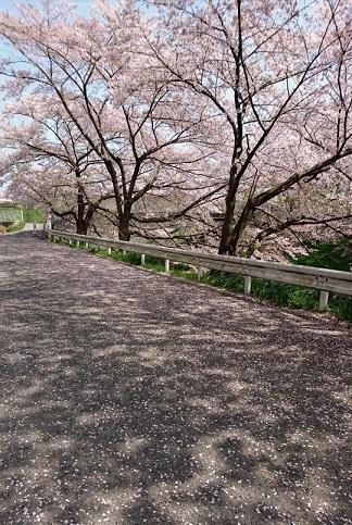 水仙の春色タペストリー 2_a0122205_13052801.jpg