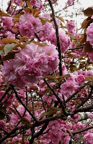 水仙の春色タペストリー 2_a0122205_13053865.jpg