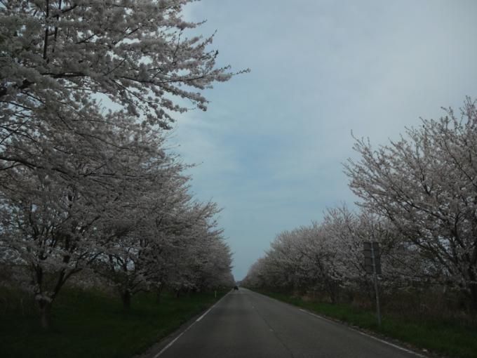 春らしい七塚中央公園!_f0170422_21554024.jpg