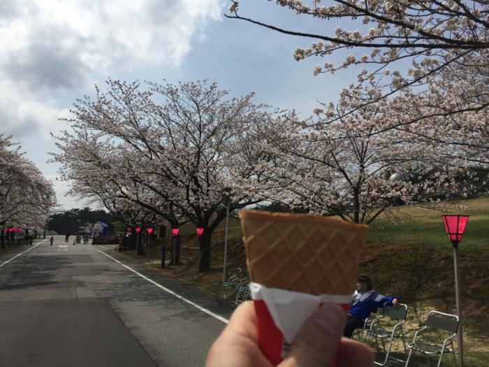 桜🌸_a0156636_19411719.jpg