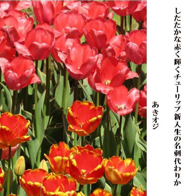 f0117041_15173567.jpg
