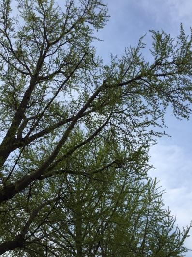 イベント情報!  森と花の祭典〜緑の感謝祭〜_a0267845_18384308.jpg
