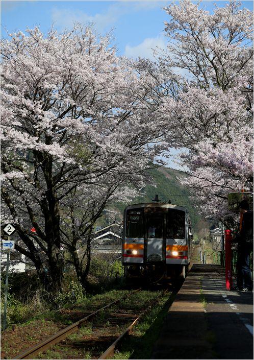 三浦駅の桜_a0256349_1020292.jpg