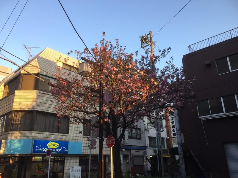 八重桜咲いた!満開です。&4月18日(火)のランチメニュー_d0243849_2215833.jpg
