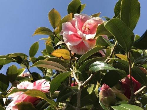 アロマでリラックスの香り★_f0168650_13354303.jpg