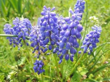 春の花たち_e0099359_13375791.jpg