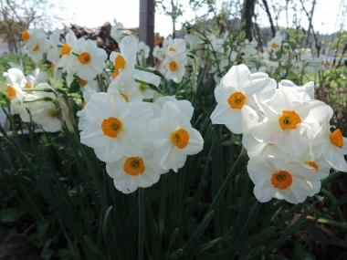 春の花たち_e0099359_13413411.jpg