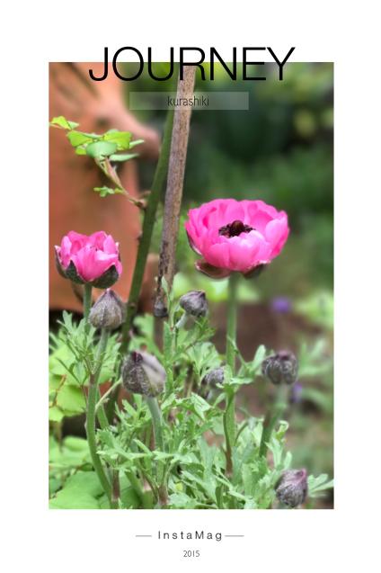 今朝の庭_c0055363_09440817.jpg