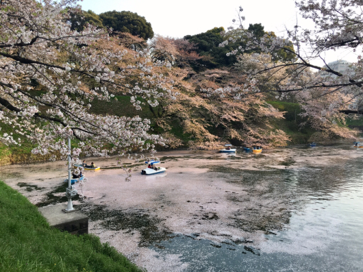 桜_f0126965_02211405.jpg