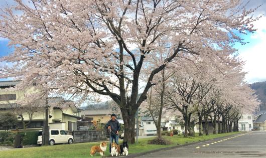 桜_f0126965_02211448.jpg