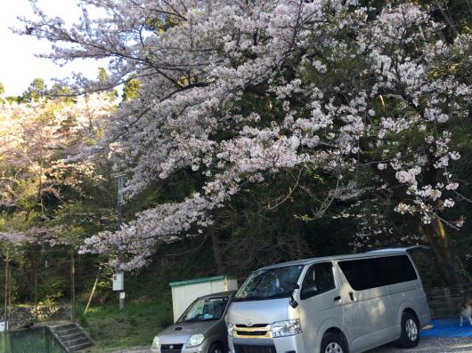 桜_f0126965_02211514.jpg