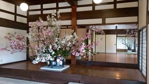 ◆最後の桜・・「行き行きて 行きて花」いけばな二人展  豊中 桜の庄兵衛ギャラリー_e0154682_17003073.jpg