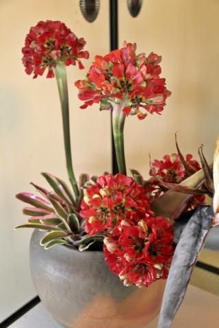 ◆最後の桜・・「行き行きて 行きて花」いけばな二人展  豊中 桜の庄兵衛ギャラリー_e0154682_17091704.jpg