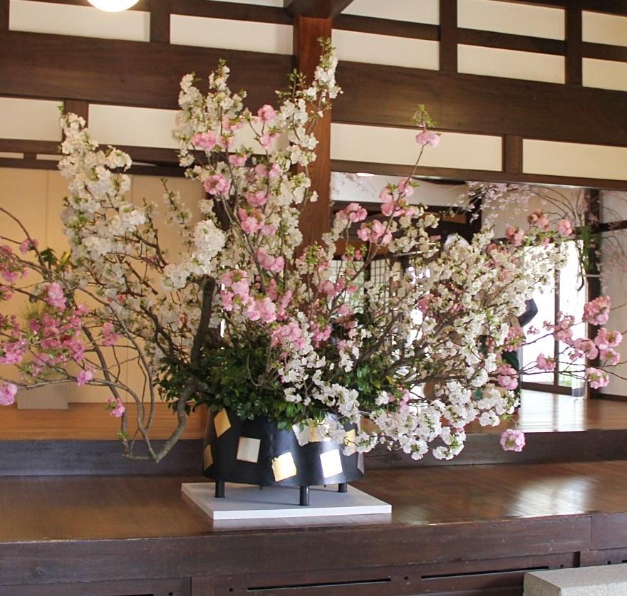 ◆最後の桜・・「行き行きて 行きて花」いけばな二人展  豊中 桜の庄兵衛ギャラリー_e0154682_17264712.jpg