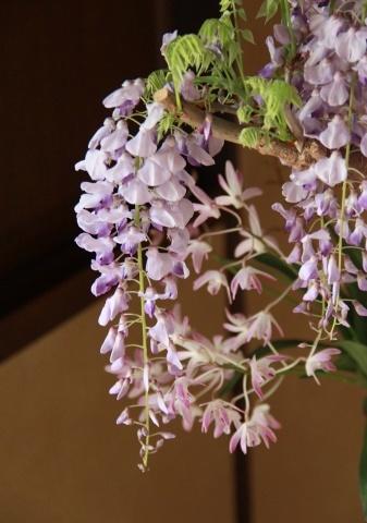 ◆最後の桜・・「行き行きて 行きて花」いけばな二人展  豊中 桜の庄兵衛ギャラリー_e0154682_22283893.jpg