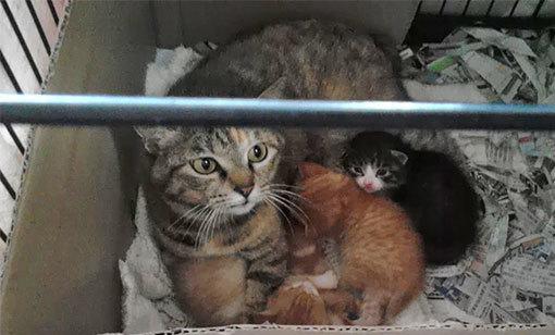 すずかあさんと子猫たち&はっとりくん_d0071596_21190015.jpg