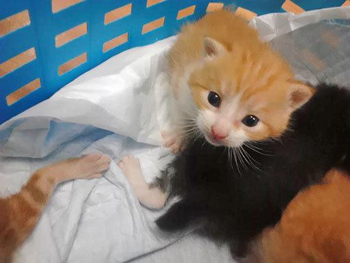 すずかあさんと子猫たち&はっとりくん_d0071596_21244226.jpg