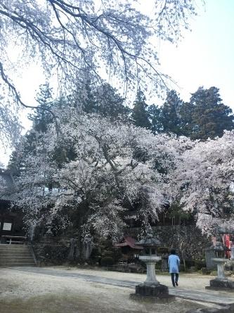 お花見_e0187897_20362794.jpg