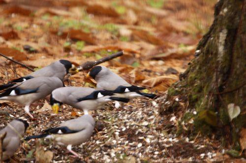 庭仕事、小鳥たち、蕗の薹_c0090198_18354369.jpg