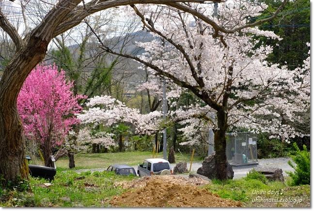 秩父 かき氷と桜ツーリング♪_f0179404_22022583.jpg