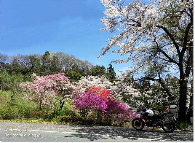 秩父 かき氷と桜ツーリング♪_f0179404_22090526.jpg