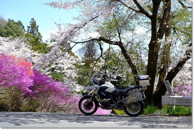 秩父 かき氷と桜ツーリング♪_f0179404_22143612.jpg
