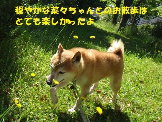 f0121712_16083298.jpg