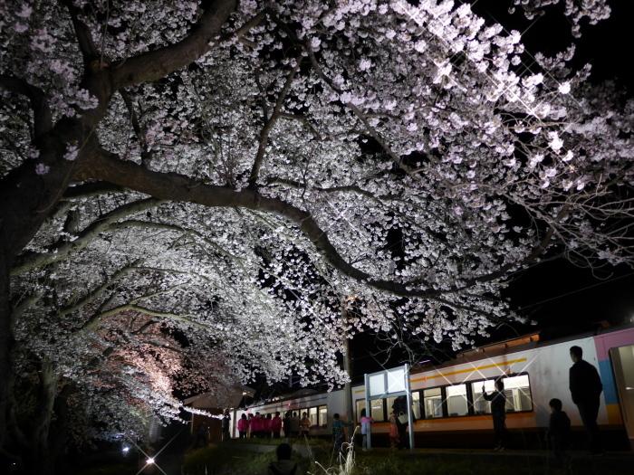 えちご分水夜桜号_e0169421_21450243.jpg