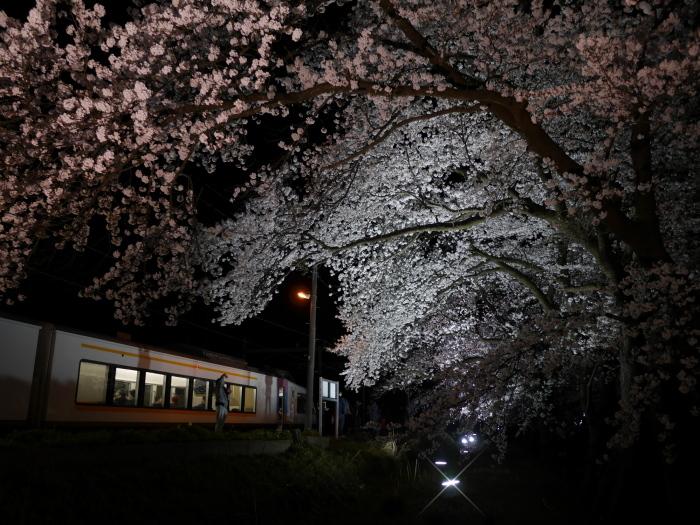 えちご分水夜桜号_e0169421_21450587.jpg